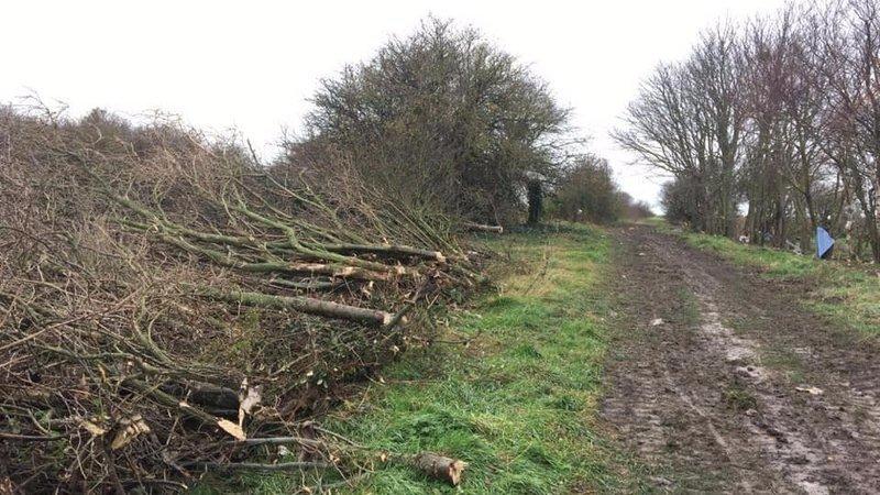 Destruction systématique de la végétation à Calais : ça suffit !